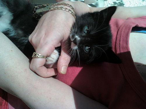 my we kitten