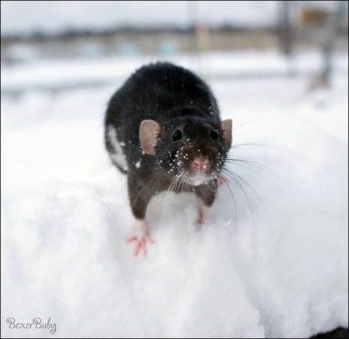 whiskey in the snow