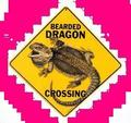 Beardie Crossing - the-animal-kingdom photo