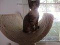 Becca's Kitten