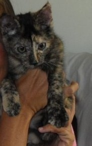 My kitten Midnight
