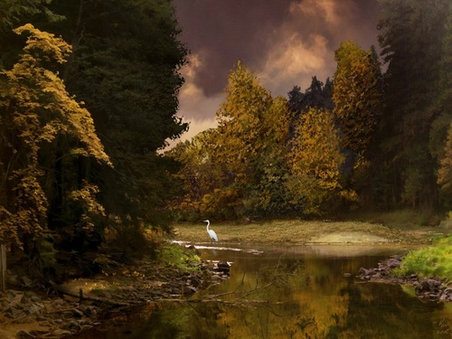 National Geographic Hintergrund with a riparian forest entitled Amazing Nature Hintergründe