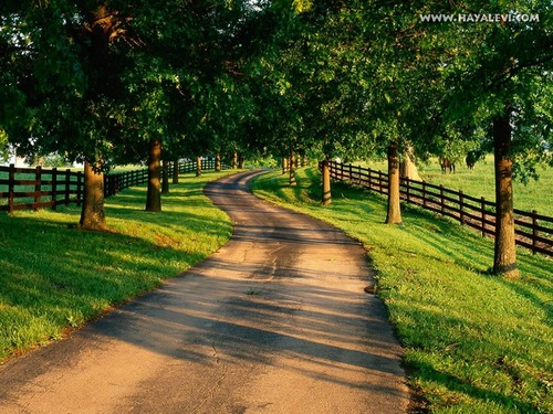 national geographic wallpaper probably with a rail fence titled Amazing Nature wallpapers