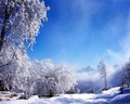Beautiful Winter