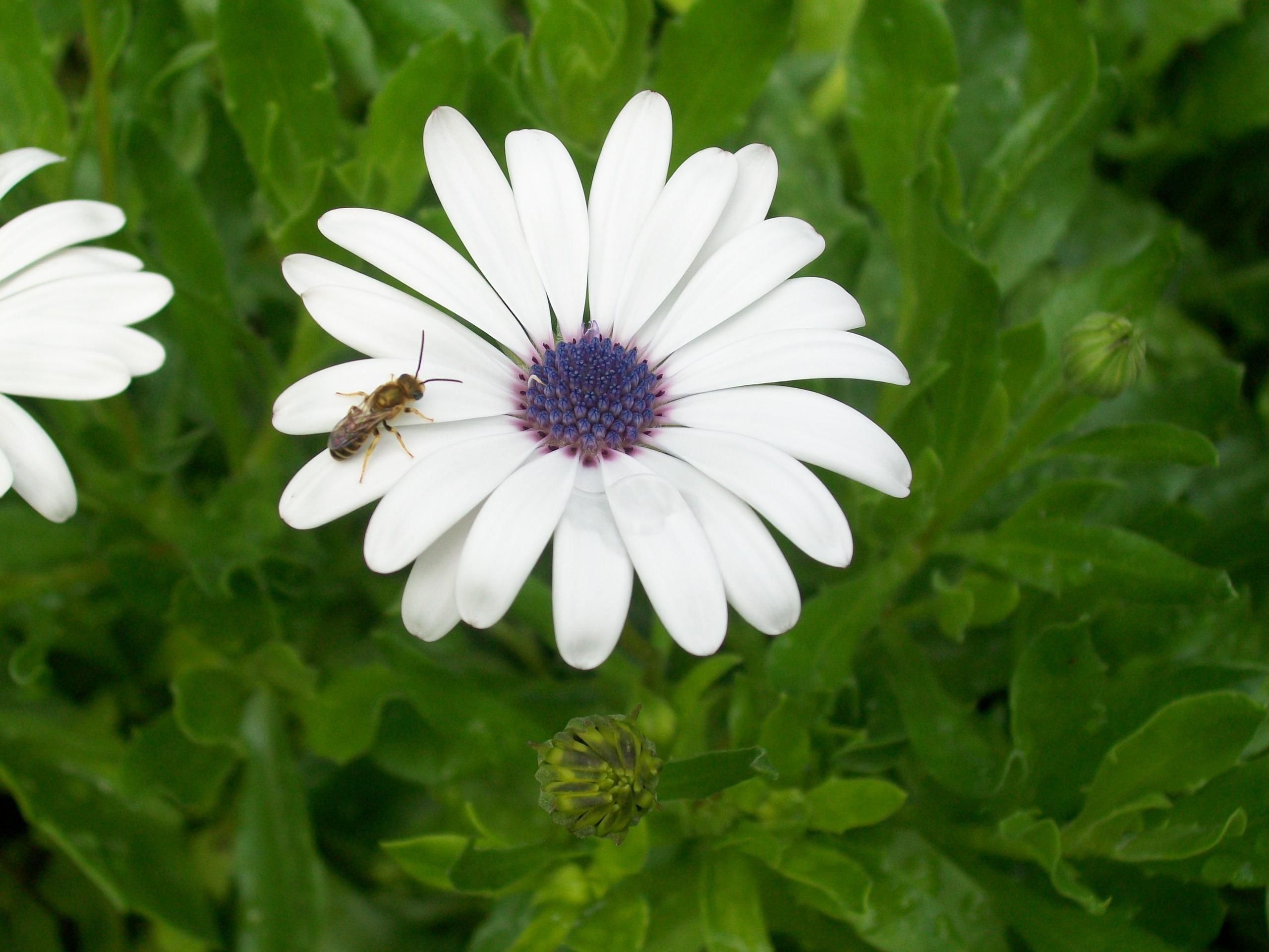 Bee on a Flower graphy Wallpaper Fanpop
