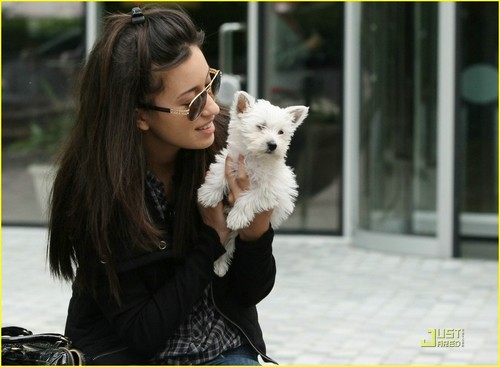 Christian Serratos achtergrond probably with a west highland white terriër titled Christian