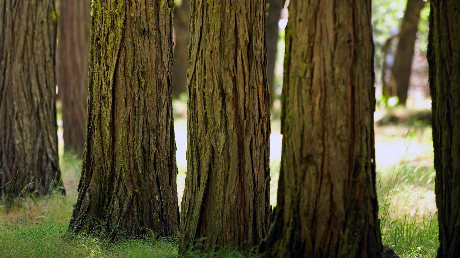 Nature Full HD Обои