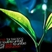 Nature/Spring - national-geographic icon