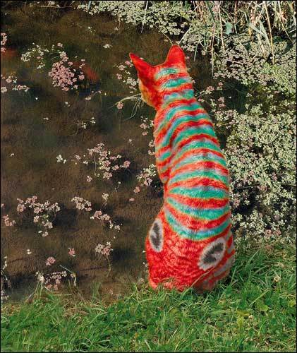 a cat یا fish?