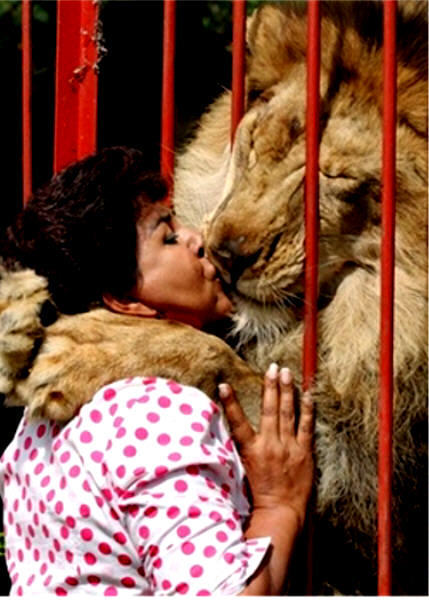 All About Lions Images Lion Kissing Woman In Zoo Scary Hilarious