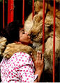 lion kissing woman in zoo-scary & hilarious
