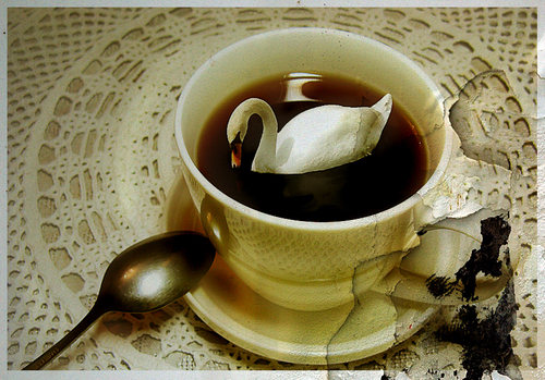 angsa, swan in coffee cup