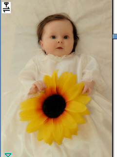 adorables bébés fond d'écran with a bouquet, a sunflower, and a common sunflower called *Smile Baby* Vicky