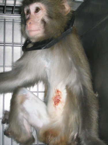 Against Animal Testing!