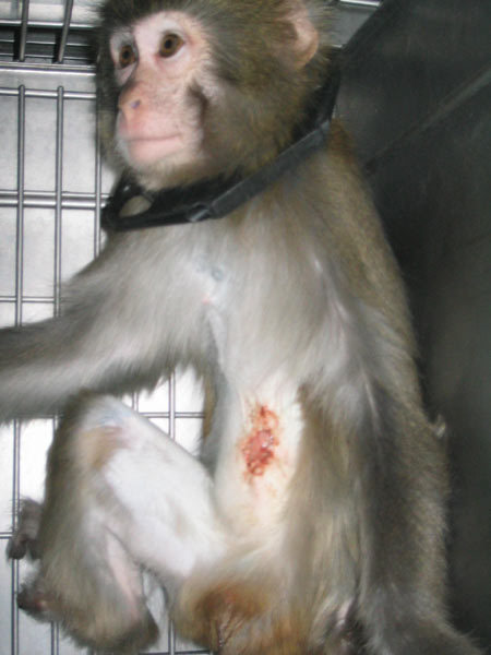 two sides to animal testing Help end cosmetics testing on animals in the us after two years of daily exposure, they are killed so their tissues can be examined for signs of cancer.