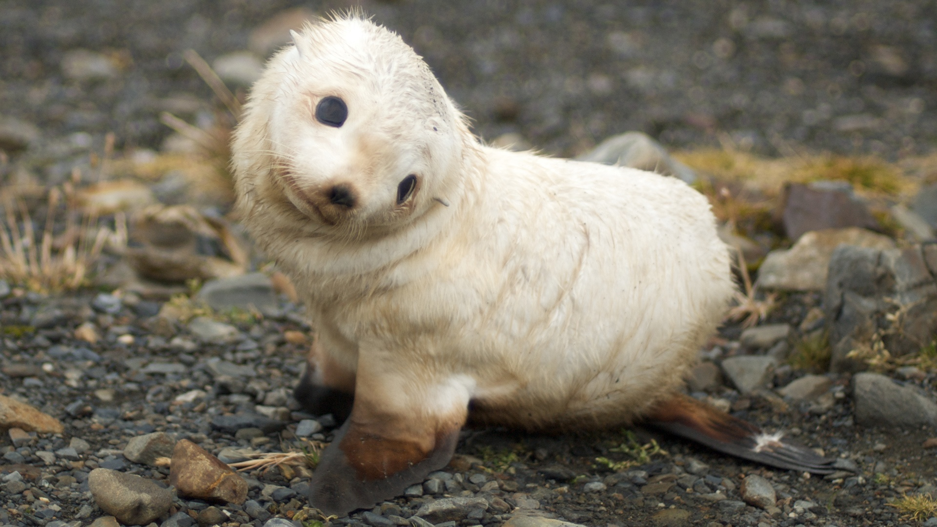Animals baby seal
