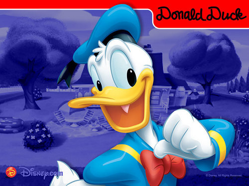 Disney fond d'écran possibly with animé entitled Donald canard