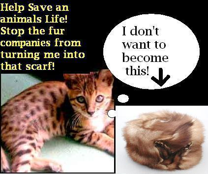 Against Animal Cruelty! wallpaper probably with anime entitled Stop Animal Cruelty!!!
