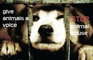 Against Animal Cruelty! wallpaper titled Stop Animal Cruelty!!!