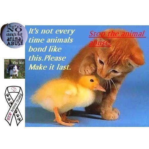 Stop Animal Cruelty!!!