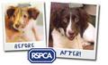 Stop Animal Cruelty!!! - against-animal-cruelty photo