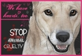Stop Animal Cruelty!!! - against-animal-cruelty photo