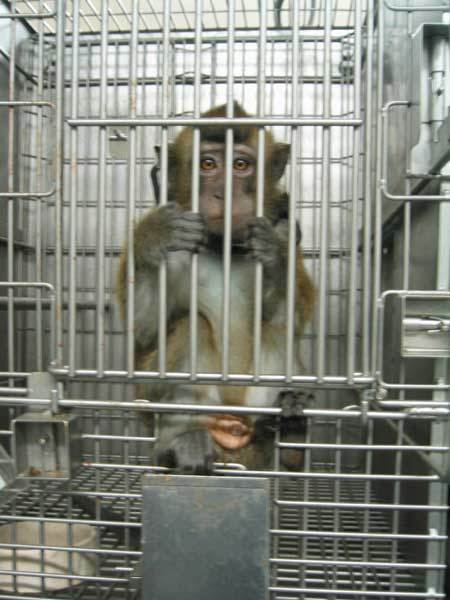 Are you for or against Animal testing?