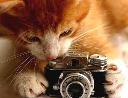 Curiosity...killed the cat!
