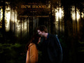 New Moon wallpepers - twilight-series photo