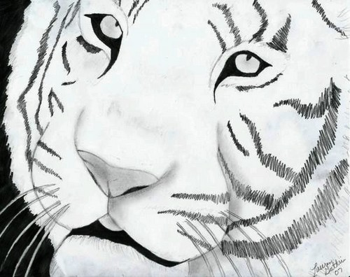 Drawing দেওয়ালপত্র entitled Tiger