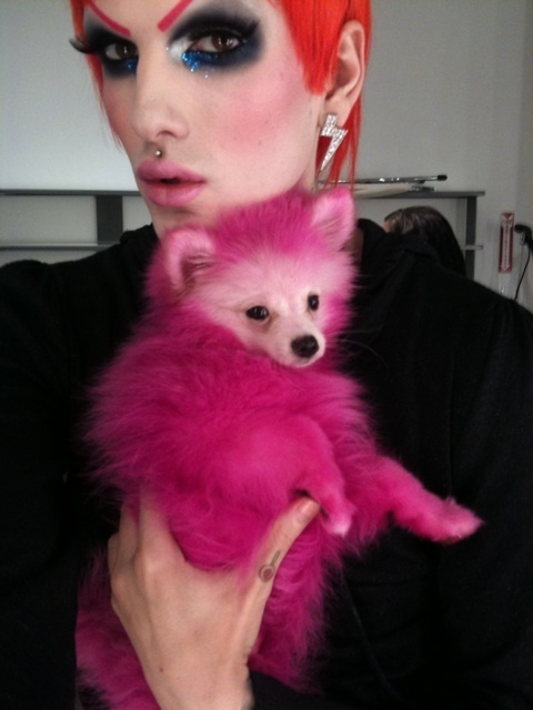 jeffree stars dog