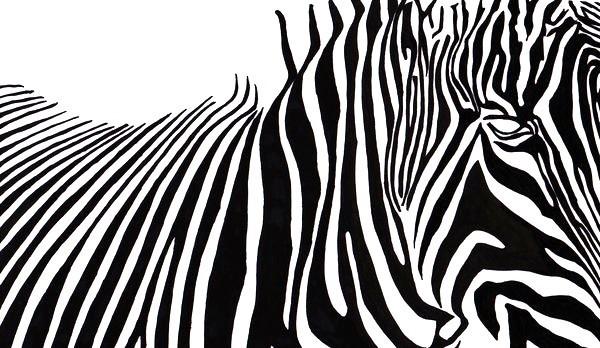 シマウマ, ゼブラ Stripes
