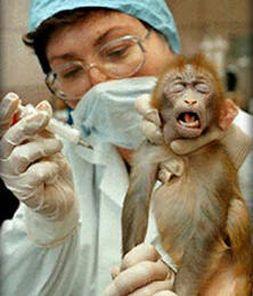 help animal testing!