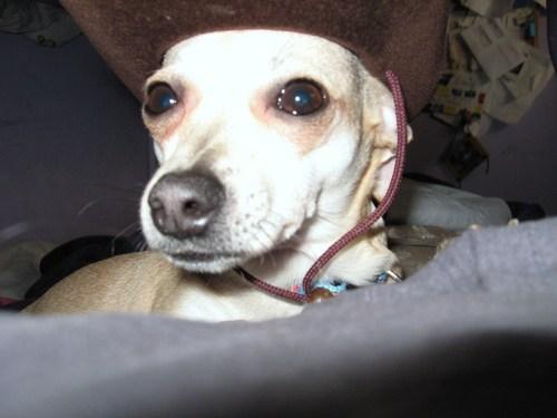 my_dog_cookie