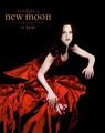 ---Twilight--- - twilight-series photo