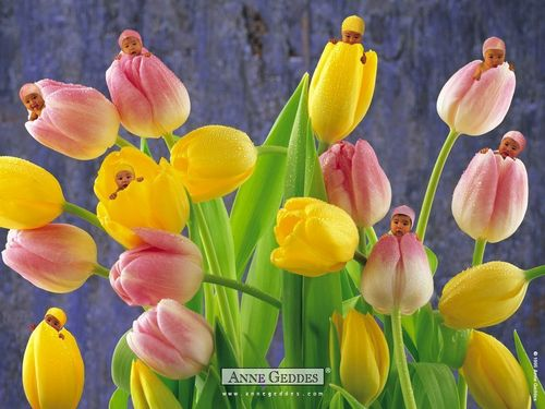 Babies Tulips - sweety-babies Wallpaper