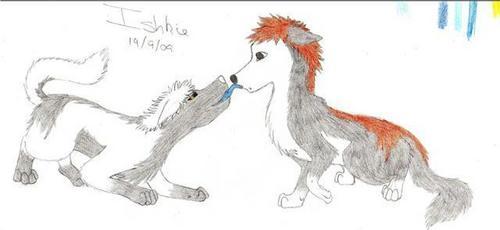 IchiHichi Mbwa mwitu loups