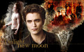 robert-pattinson - New Moon wallpaper
