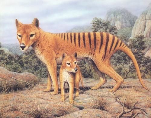 Thylacine Painting