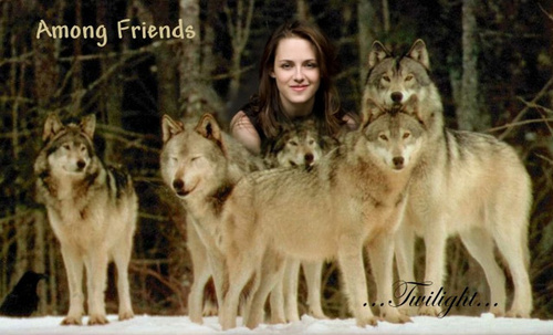 Bella and the wolfs