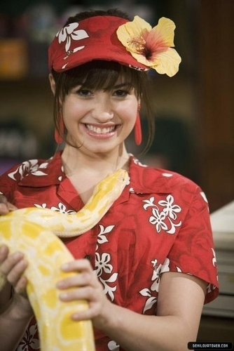 Sonny Munroe wallpaper possibly containing a tamale entitled Sonny Munroe