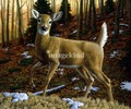 Whitetail Doe painting