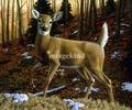 Whitetail Doe painting