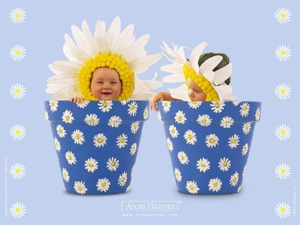 daisy Babies