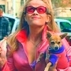 Legally Blonde 写真 probably with a チワワ and sunglasses titled Elle Woods!!!!