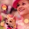 Legally Blonde photo probably with a chihuahua and a portrait entitled Elle Woods!!!!