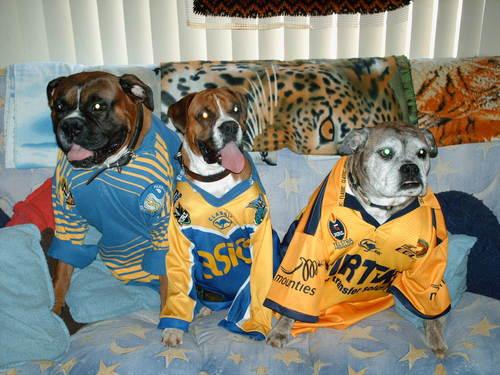 Even the cachorros go for Parra now!
