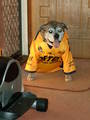 Even the Dogs go for Parra now!