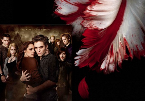 New Moon wallpaper 3