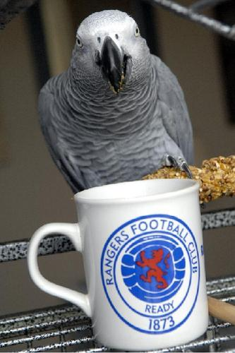 Sparky Gets His Cuppa chai